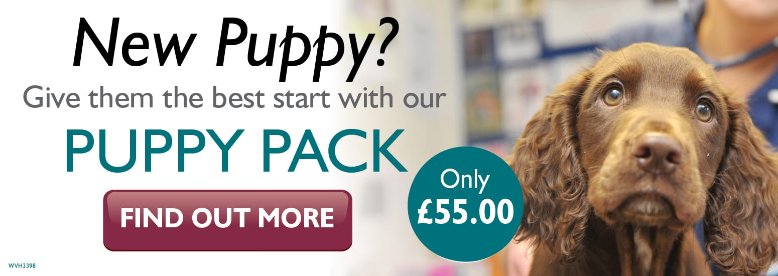Puppy Pack covering puppy injections, flea & worm treatment, and much more for only £55 at vets in Middlewich