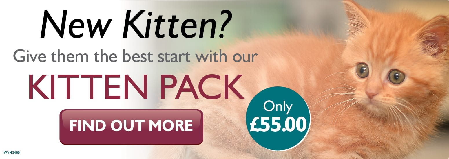 Kitten Pack covering kitten injections, flea & worm treatment, and much more for only £55 at vets in Middlewich